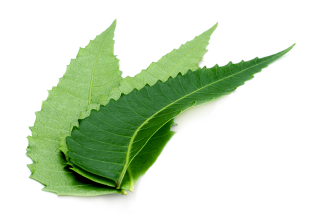 Ayurvedic neem leaves over white background Stock Photo