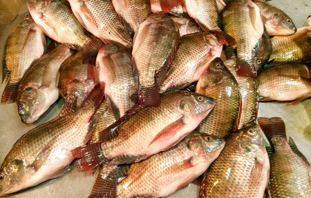 Mozambique tilapia fish of South Asia Imagens