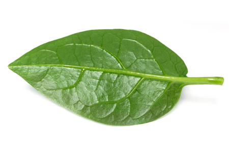 Malabar spinach over white background Imagens