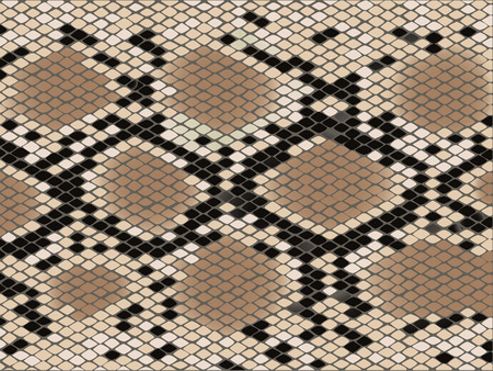 Snake skin with the pattern lozenge form