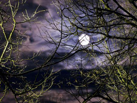 night moon: Noche de luna y las nubes a trav�s de los �rboles