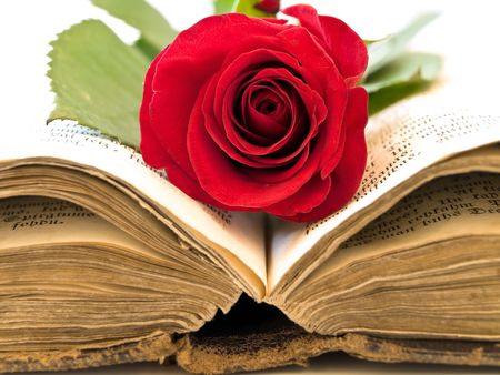 Old open book with the red rose into