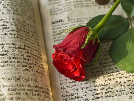 the scriptures: red rose at the old open book
