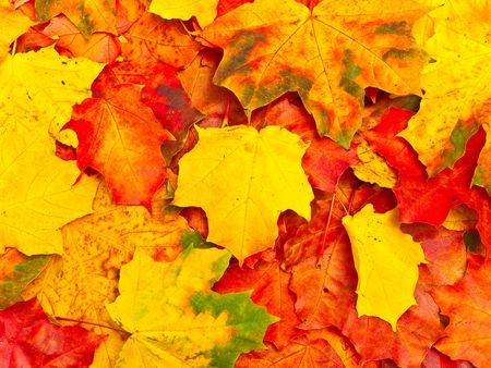 Photo of the autumn leaves background Stock Photo - 3647374