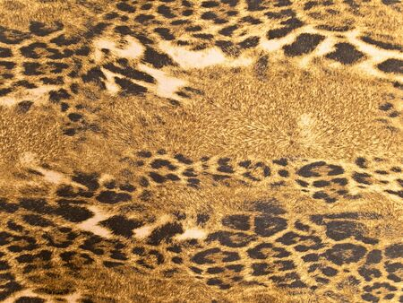 Photo of the brown wild leopard background  photo