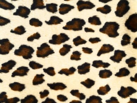 spotted fur: photo of the spotted leopard background