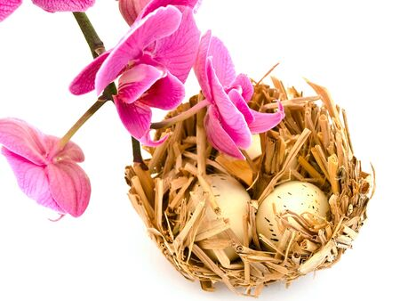 Bird nest with three egs and pink orchid flower photo