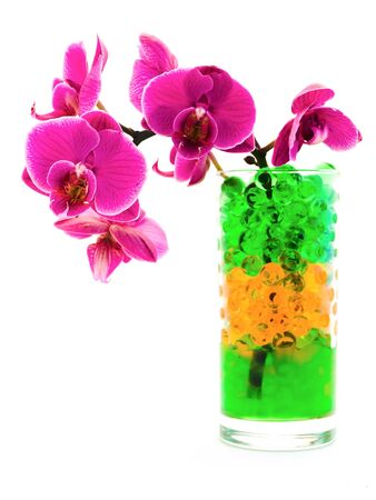 pink orchid flower in glass with hydrogel photo