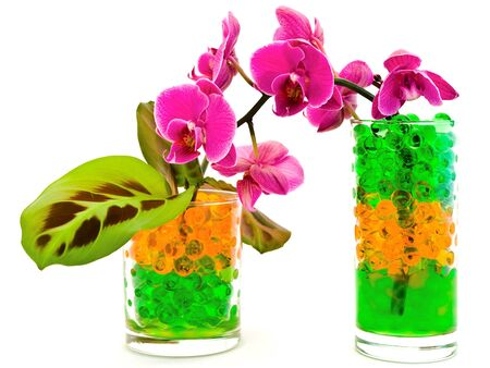 pink orchid flower and green plants in glass with hydrogel photo