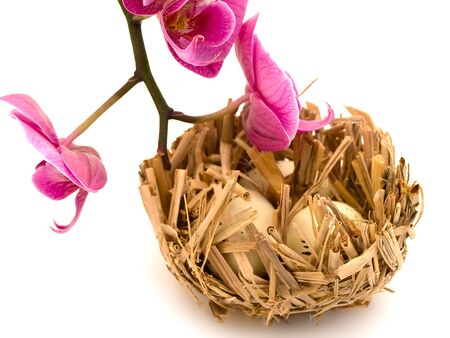Bird nest with three eggs and pink orchid flower photo