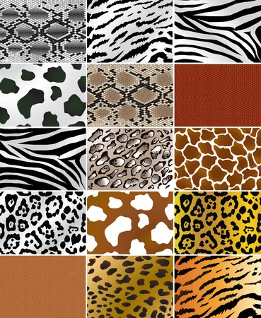 Illustation of different animals and snakes skins Stock Photo