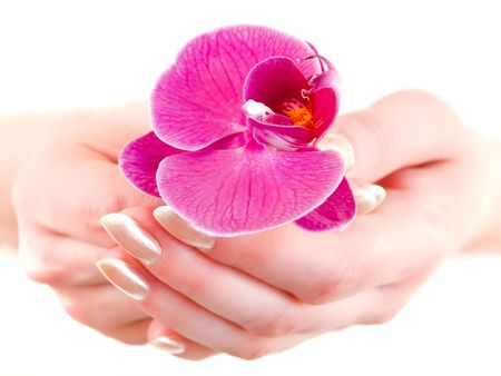 purple orchid in woman hands against white