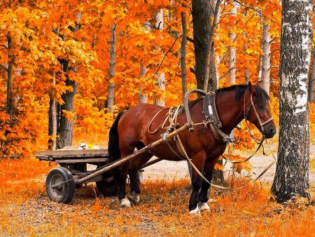 Waiting horse in golden autumn forest