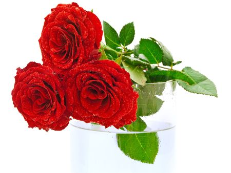 red beautiful roses with watter drops on the vase photo