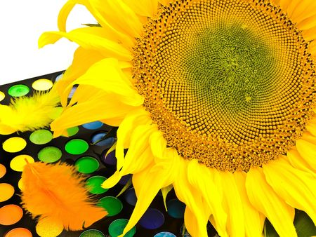 ablooming: yellow sunflower on the pallette with the make-up of different colors