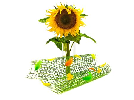 ablooming: yellow sunflower in vase near multicolored abstract decoration over white background