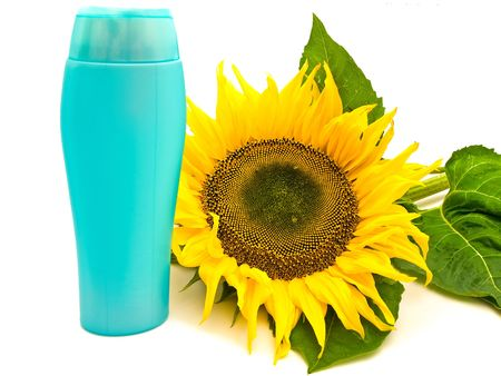 ablooming: yellow big sunflower near the shampoo bottle  over white background