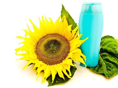 yellow big sunflower near the shampoo bottle  over white background photo