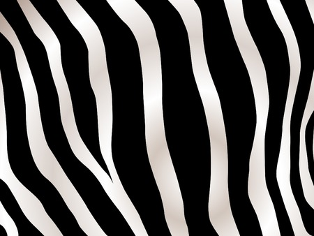 Black and white stripped zebra design background  Vector