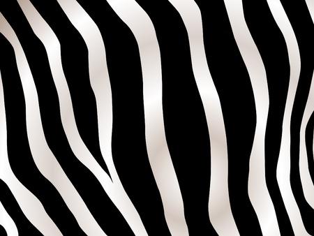 zebra print: Black and white stripped zebra design background