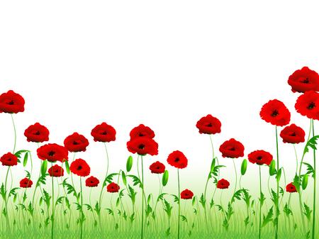 poppy field: Ilustraci�n de campo verde de amapola con copia-espacio para el texto Vectores