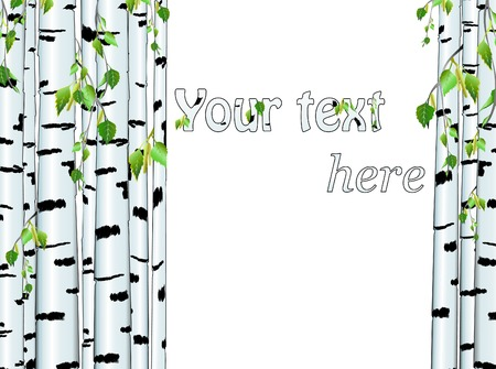 birch: Illustration of the birch trunk frame with copyspace for your text on white