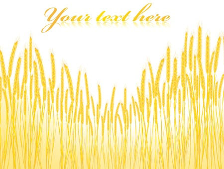 text field: Illustration of the field of wheat with copyspace for your text  Illustration