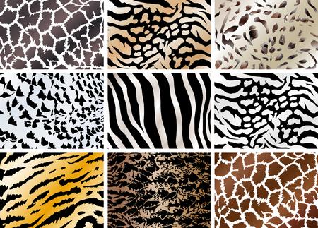 Illustration of set animals skin backgrounds. Zebra, owl, giraffe,tiger, cat. 일러스트