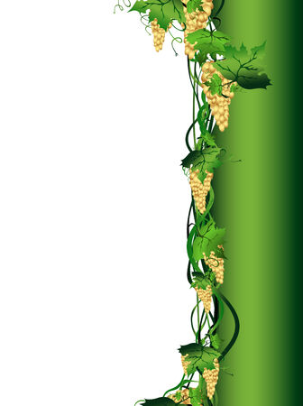 Illustration of golden grape vine with copyspace for your text Stock Vector - 6209220