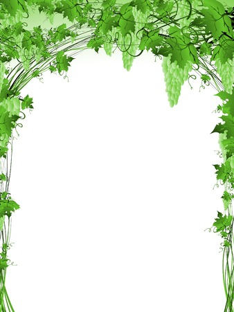 grapes on vine: Illustration of green grape vine frame with copyspace for your text Illustration