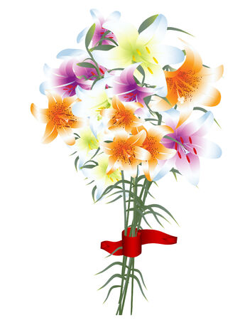 lilium: Illustration of multicolored lily bouquet against white