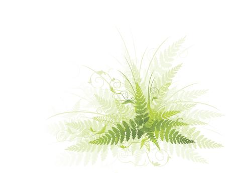 Illustration of green fern against white background Vettoriali