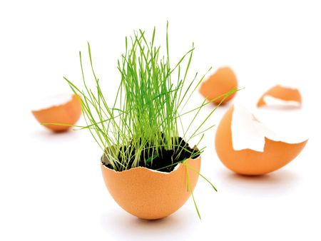 green grass growing in brown egg shell Stock Photo - 6501452