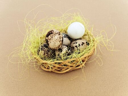 fleck: mont�n de quial huevos en el nido decorativo trasfondo beige