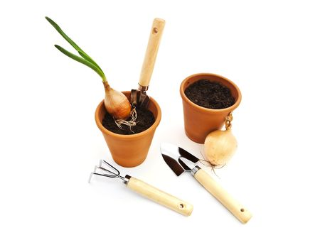 Gardening tools and pots with black soil and green onion against white background Stock Photo - 6671049