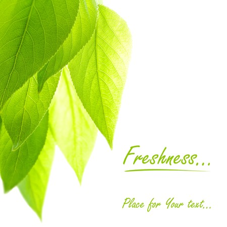 poplar leaves over the white background with copy space for text Stock Photo - 6872602