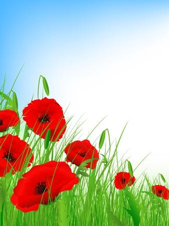 poppy field: campo de amapola con cielo azul claro y copyspace