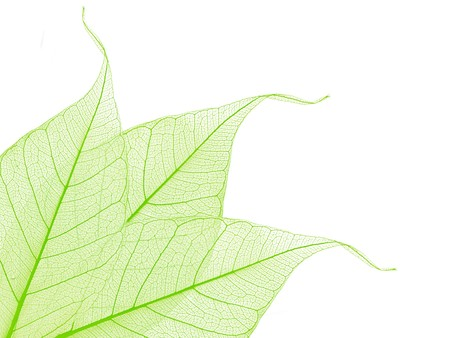 border of green decorative skeleton leaves, copyspace for your text photo