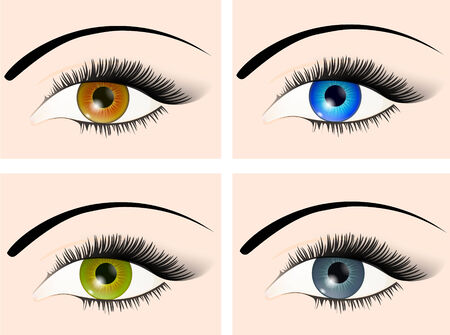 four different colour eyes: brown, blue, green and grey Stock Vector - 7424540
