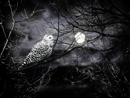 Halloween night theme with moon and owl against cloudy dark sky