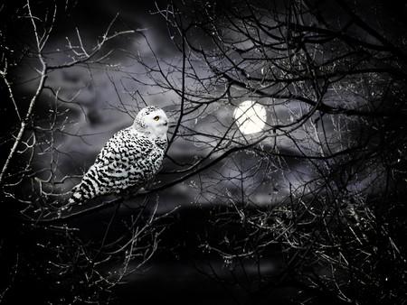 oscuro: Tema de la noche de Halloween con la Luna y el b�ho contra nublado cielo oscuro  Foto de archivo