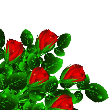 red roses bouquet over white, copyspace Vector