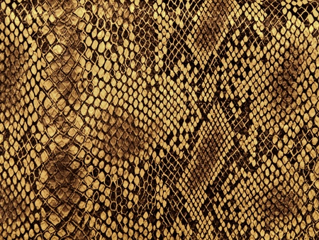 snake skin: snake skin with the pattern lozenge style