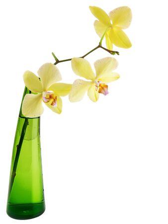 orchidee: orchidea gialla nel vaso di vetro verde su sfondo bianco  Archivio Fotografico