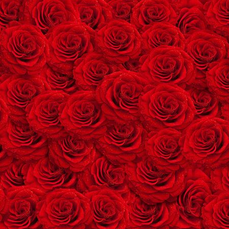 fresh red roses backgroud with water drops photo