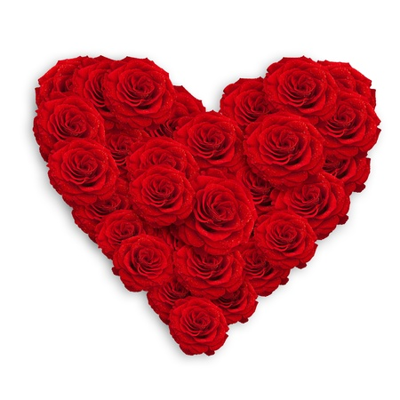 fresh red roses in heart shape over white photo