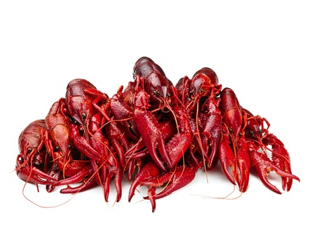 invertebrate: red boiled crawfishes over the white background