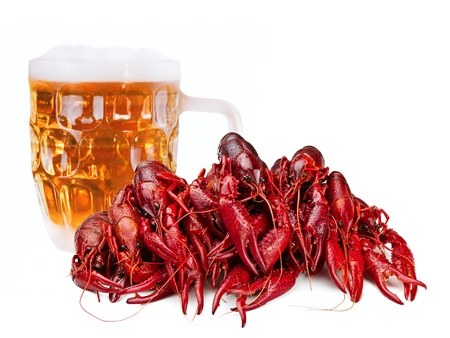 red boiled crawfishes abd beer over the white  photo