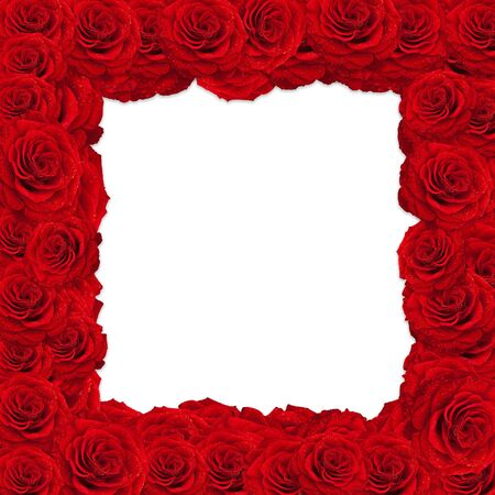 red roses frame over white background, copyspace  photo
