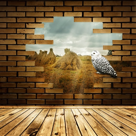 Village field in broken brick wall with white owl photo